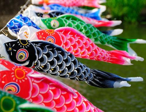 Kite making (Koinobori Japanese Kite)